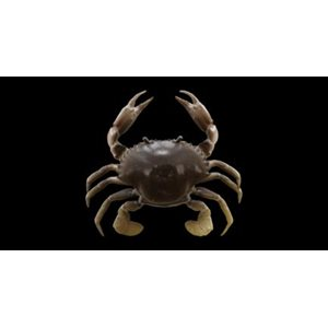"""TPE CRAB 2"""" NATURAL PEELER (SAVAGE GEAR)"""